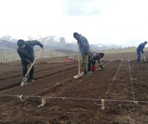 Soil preparation in Gugark.