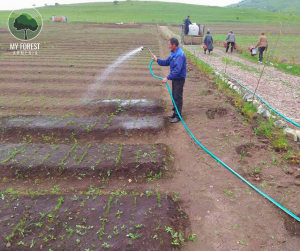 Watering with a 50 meter hose